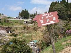 写真、醍醐桜 遊歩道